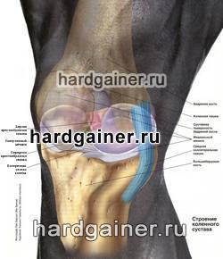 Анатомия коленного сустава хардгейнер пузырьки воздуха в суставах фото