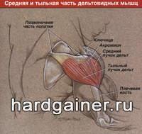 Анатомия коленного сустава хардгейнер в китае какие рецепты есть лечение хрустящих больных суставах