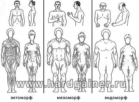 как определить жир на животе
